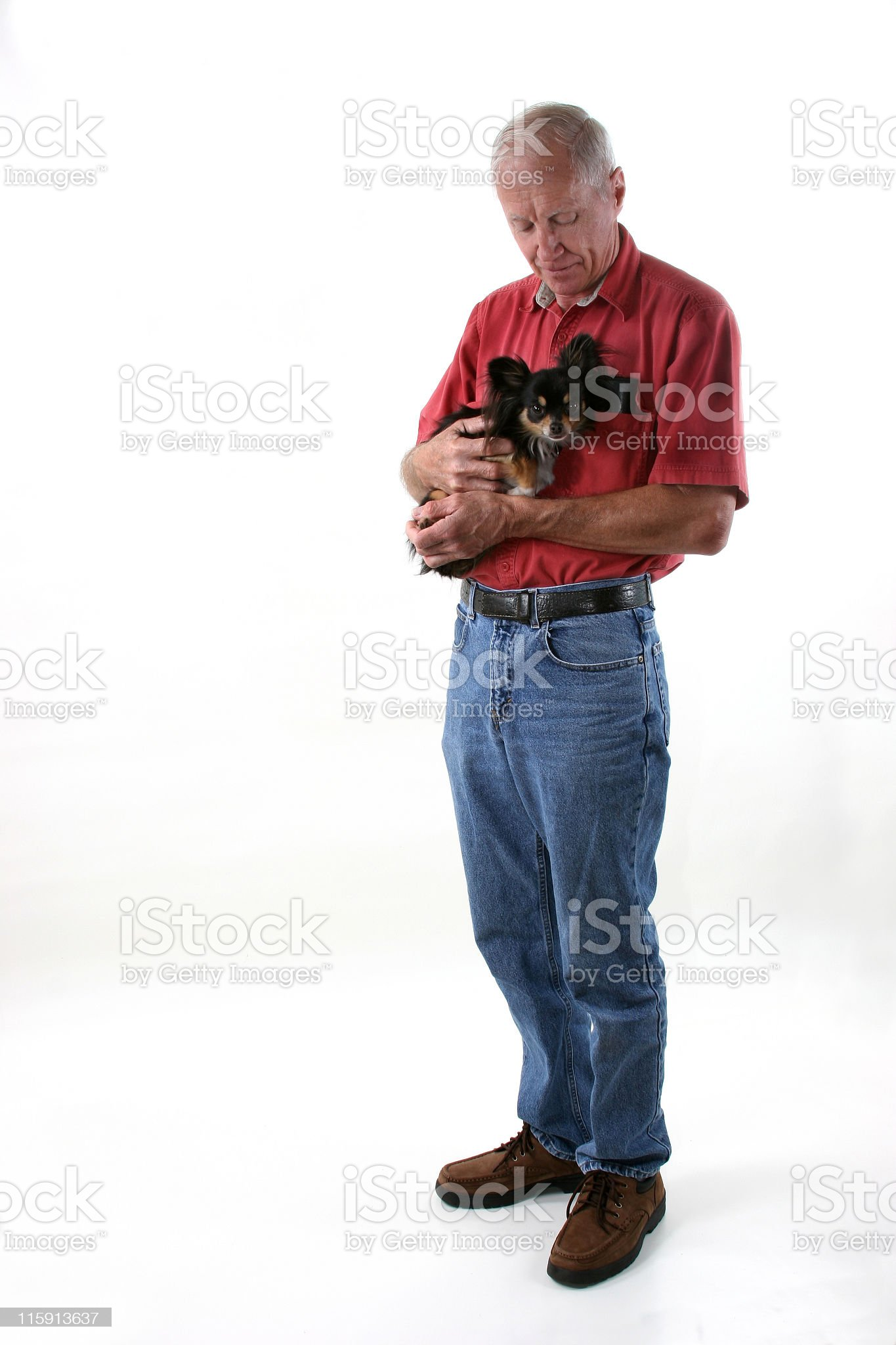 Senior man holding a little chihuahua dog on white background royalty-free stock photo