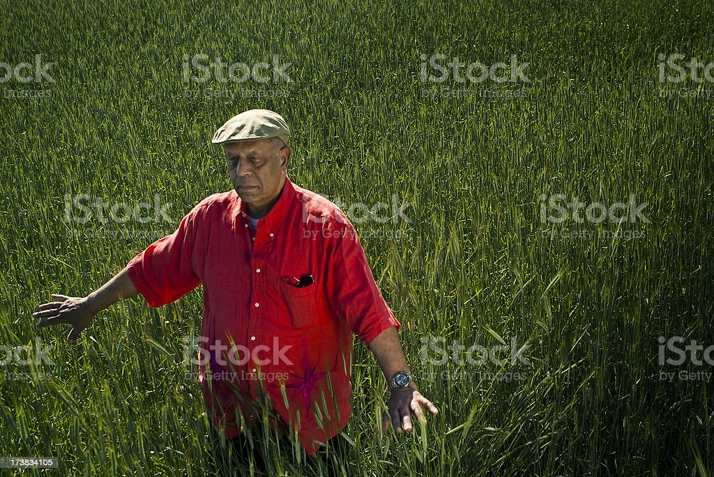 Senior Man in Field royalty-free stock photo