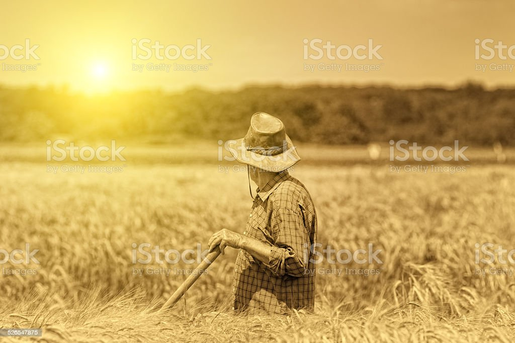 Senior man in field stock photo