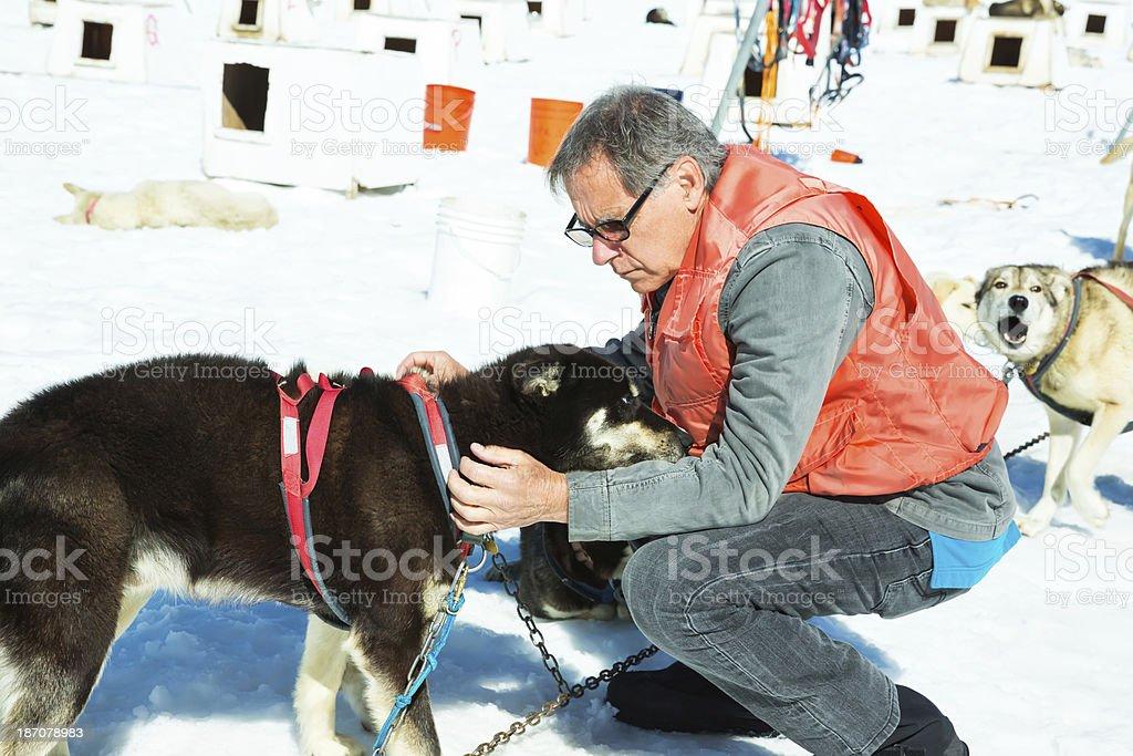 Senior Man petting a sled dog in Skagway, Alaska royalty-free stock photo