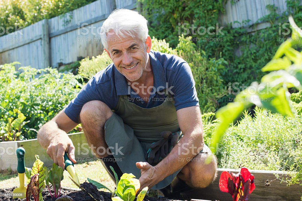 Senior man planting stock photo