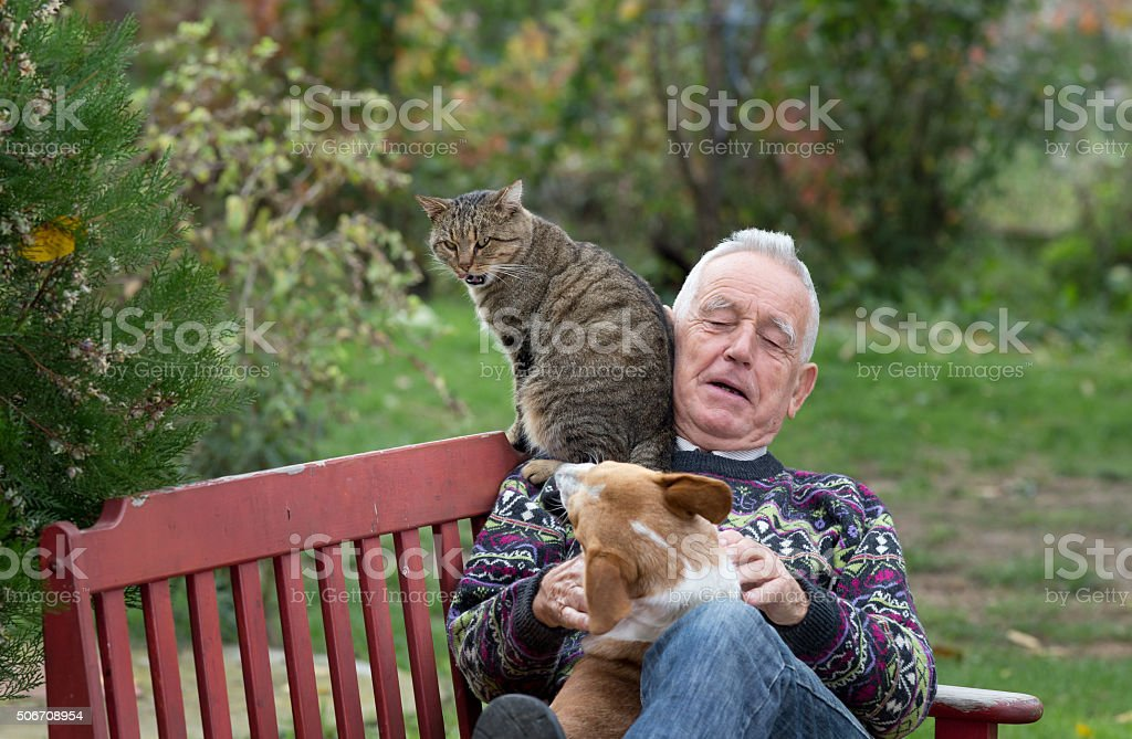 Senior man playing with pets stock photo