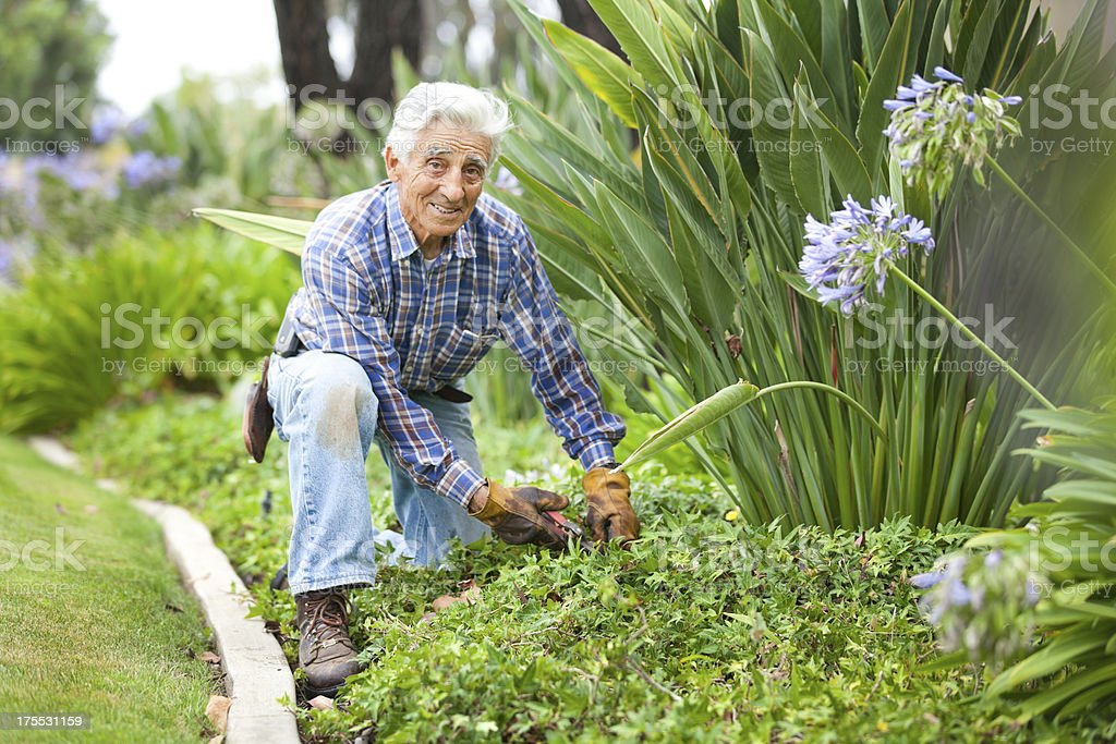 Senior man stays active by working in the garden royalty-free stock photo