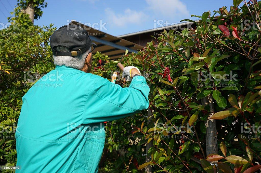 Senior man using mowing machine stock photo