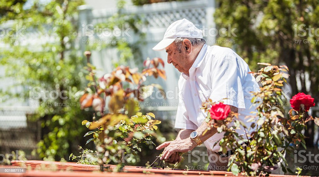 Senior man weeding the flower bed next to the house stock photo
