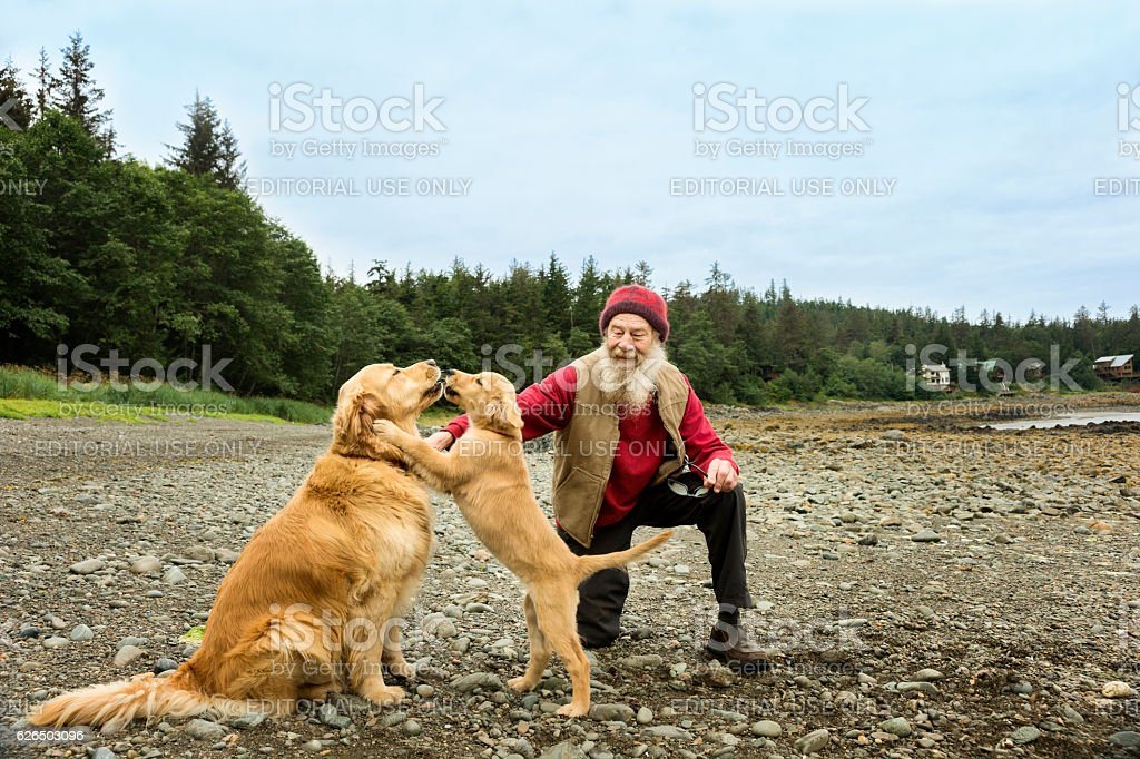 Senior man with Golden Retriever dogs stock photo