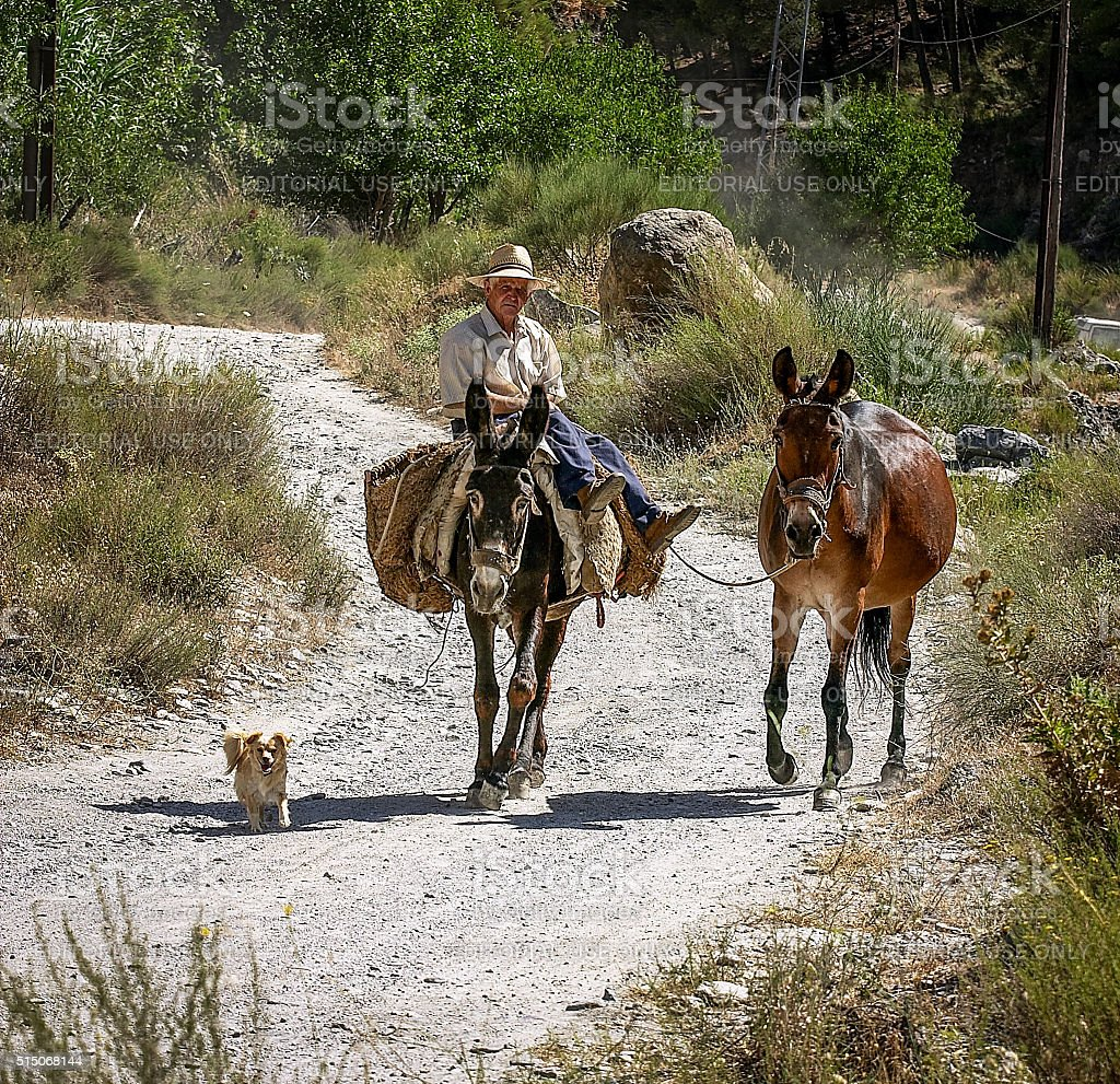 Senior man with his donkey on Andalucian track stock photo