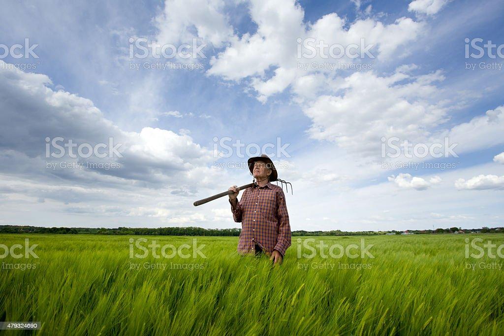 Senior peasant in barley field stock photo