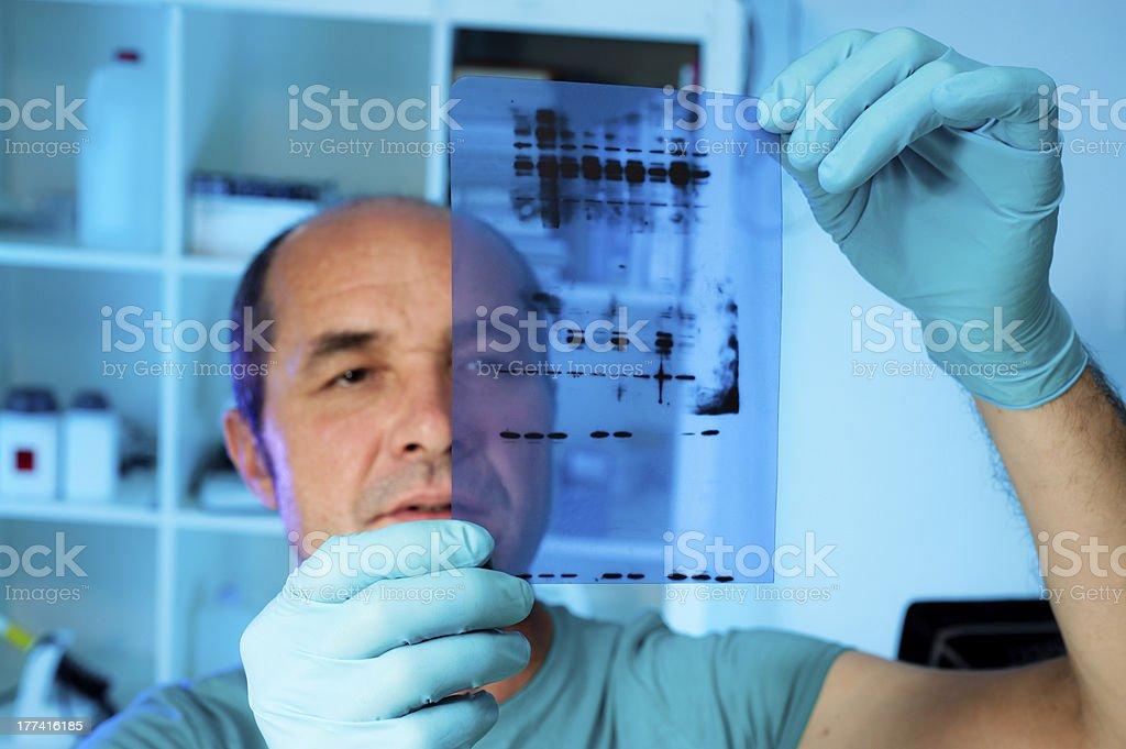 Senior scientist analyses Western blot stock photo
