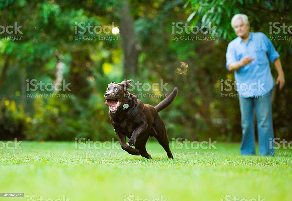 Senior training his dog stock photo