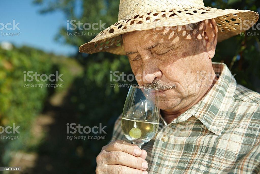 Senior vintner testing wine royalty-free stock photo