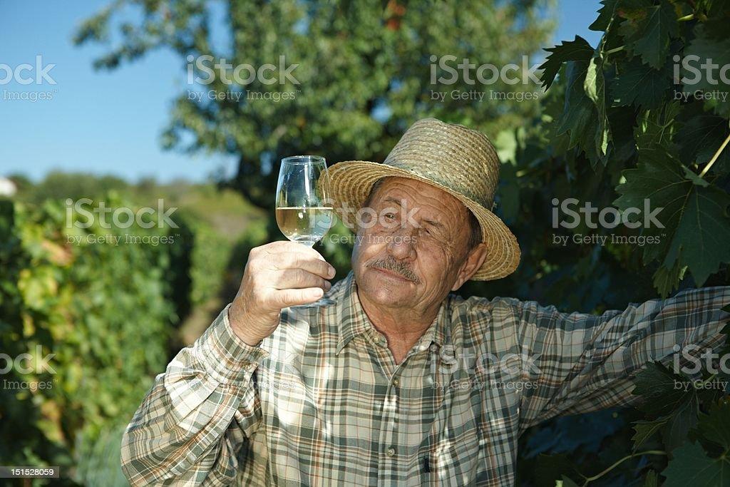 Senior vintner trying wine stock photo