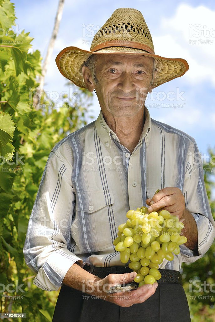 Senior winemaker royalty-free stock photo