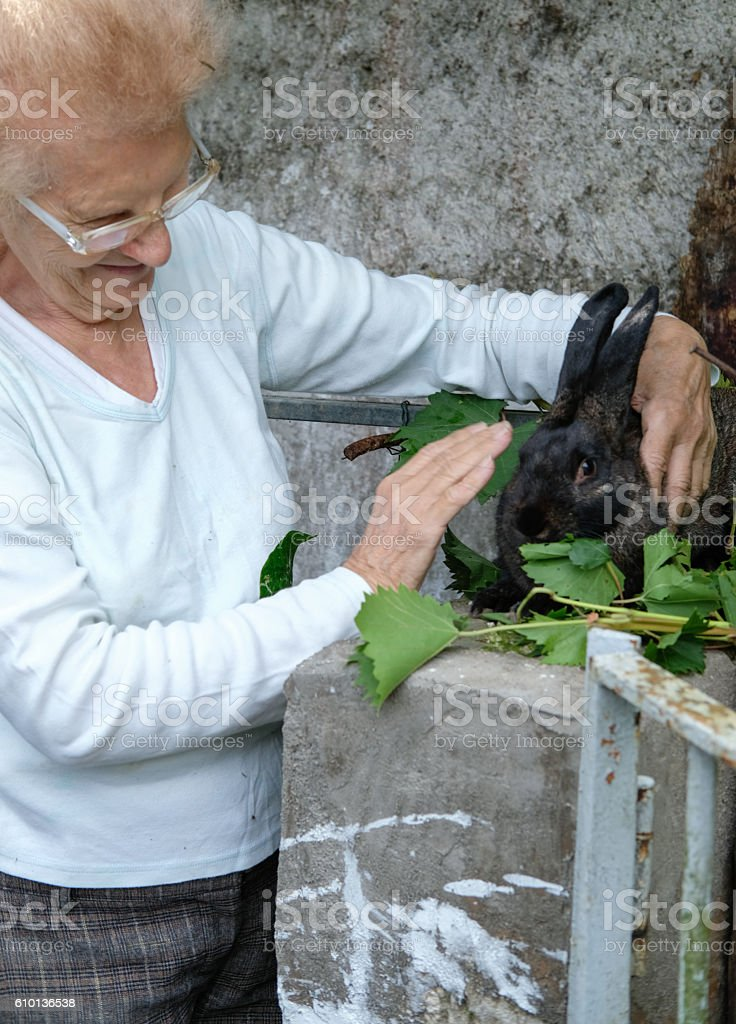 Senior Woman Caressing Black Rabbit stock photo