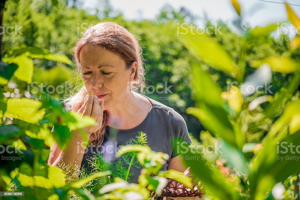 Senior Woman Collecting Chamomile in her Vegetable Garden stock photo
