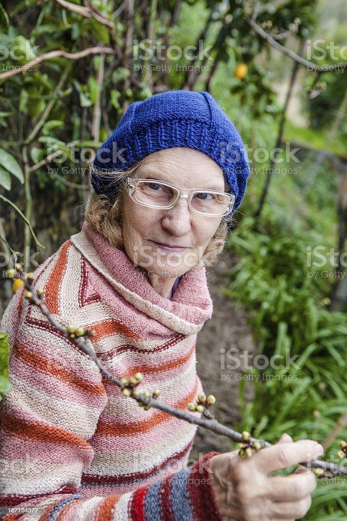 Senior Woman Gardening and Checking Cherry Blossom royalty-free stock photo
