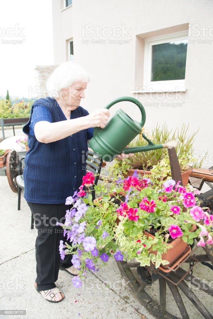 Senior Woman Gardening in The Retirement Home stock photo