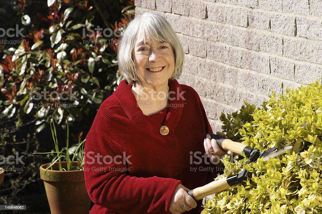 Senior woman gardening. royalty-free stock photo