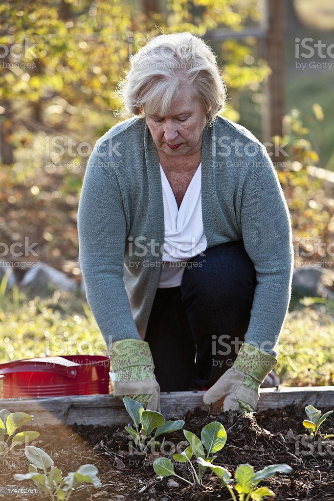 Senior woman gardening royalty-free stock photo
