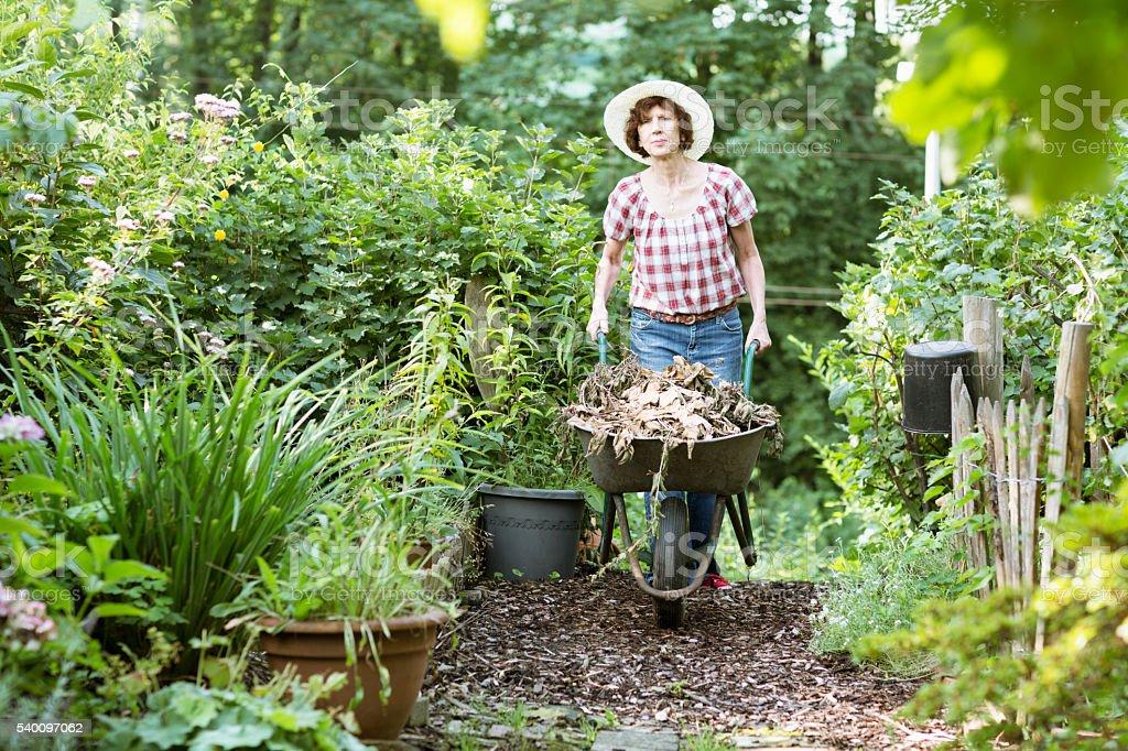 senior woman gardening wheelbarrow composting stock photo