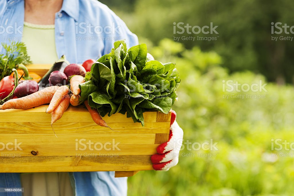 Senior woman holding box with vegetables stock photo
