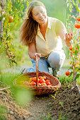 Senior Woman in her Organic Vegetable Garden