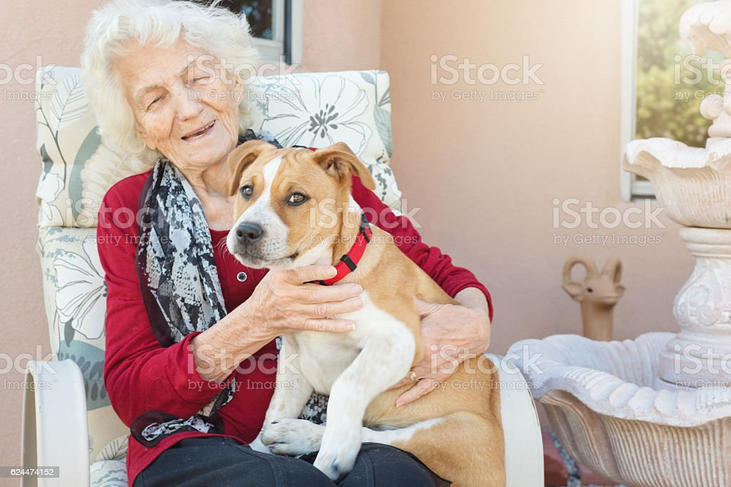 Senior Woman Loving Dog stock photo