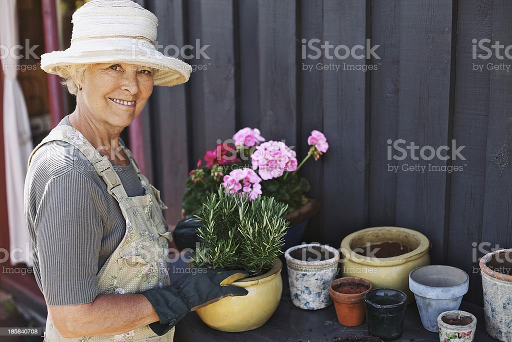 Senior woman planting flowers in a pot stock photo