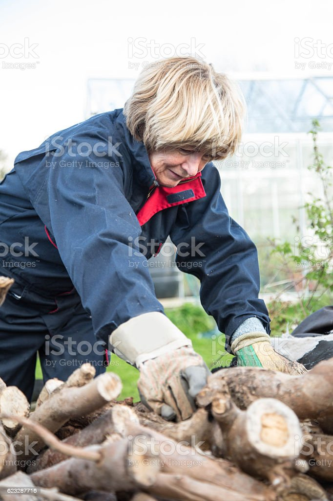 senior woman stacking fire wood stock photo