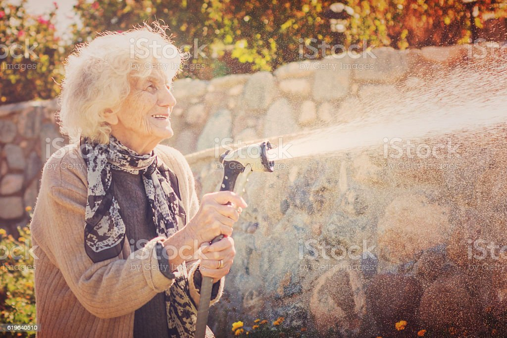 Senior Woman Watering Lawn with Garden Hose stock photo