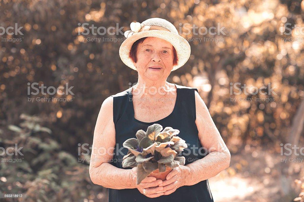 Senior woman with flower pot stock photo
