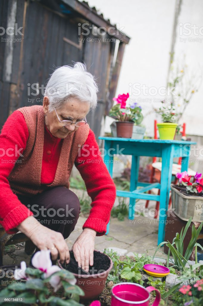 Senior woman with gardening tool working in her backyard garden stock photo