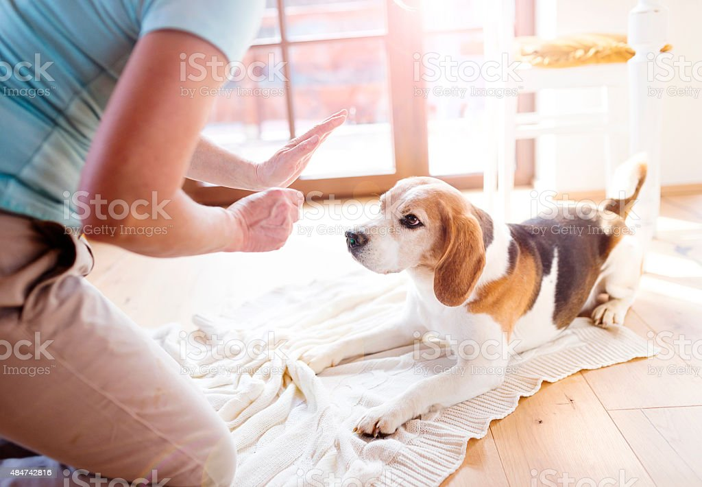 Senior woman with her dog stock photo