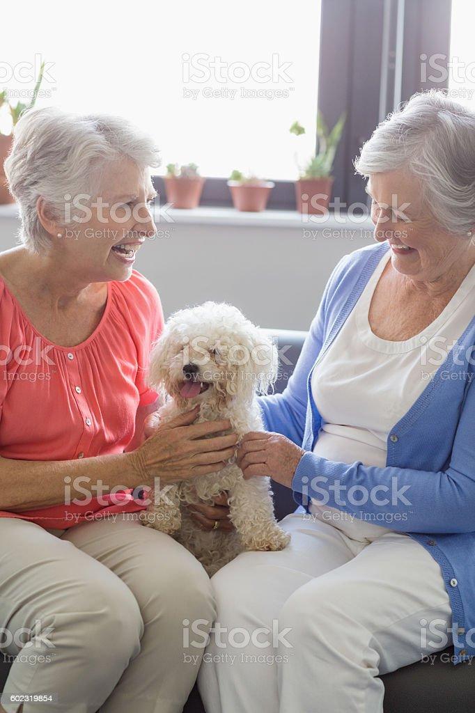 Senior women stroking a dog stock photo