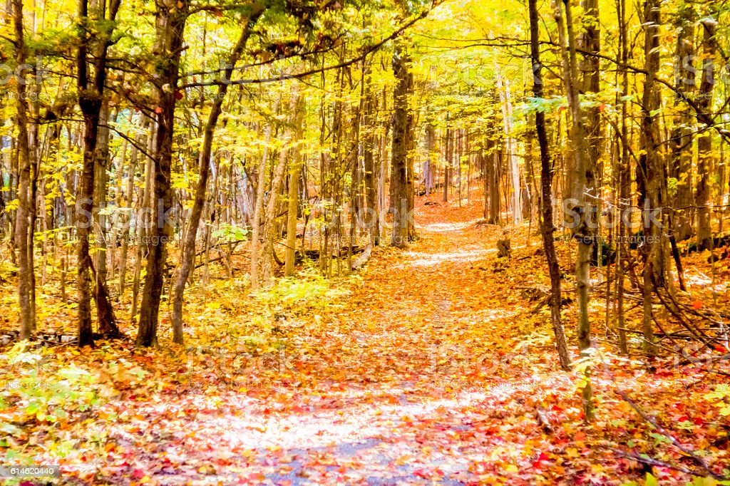 Sentier forestier automne stock photo