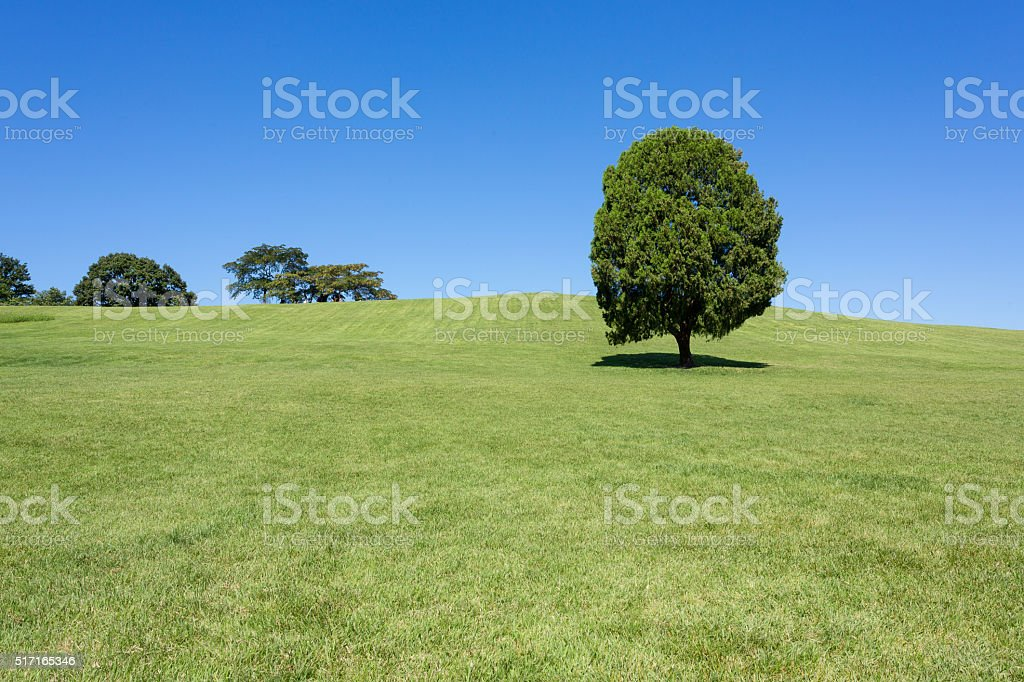 Seoul, South Korea: single tree at Olimpic park stock photo