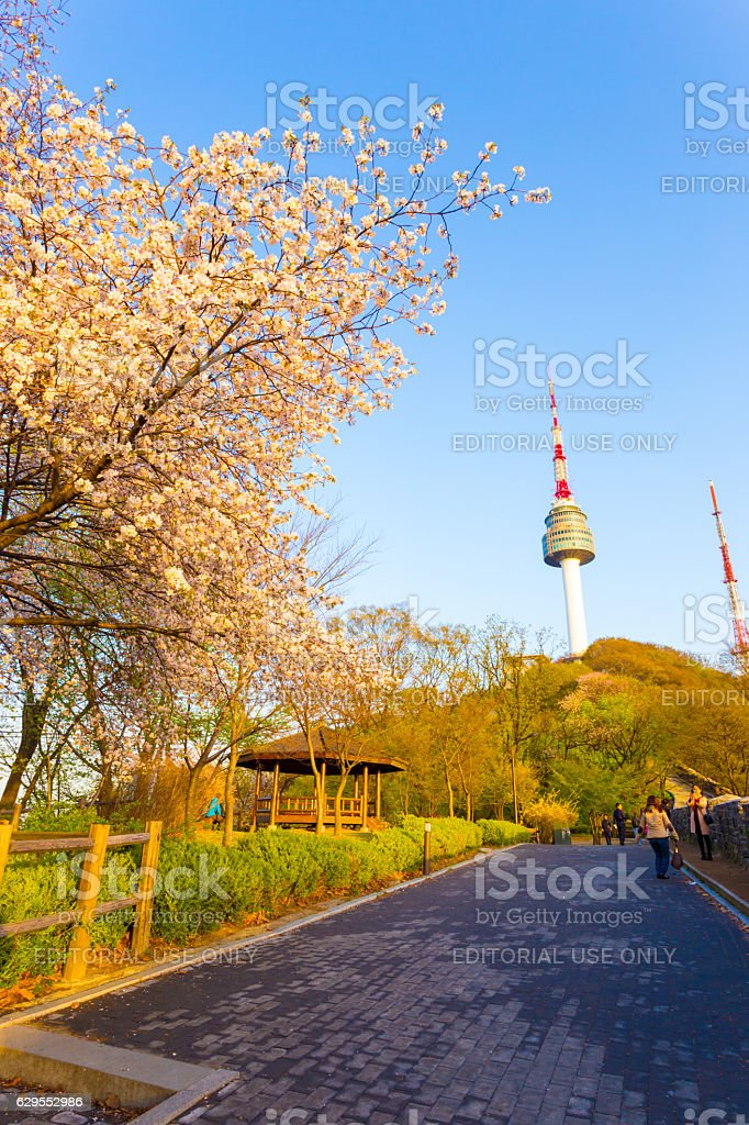 N Seoul Tower Cherry Blossoms Namsan Path Tourists stock photo