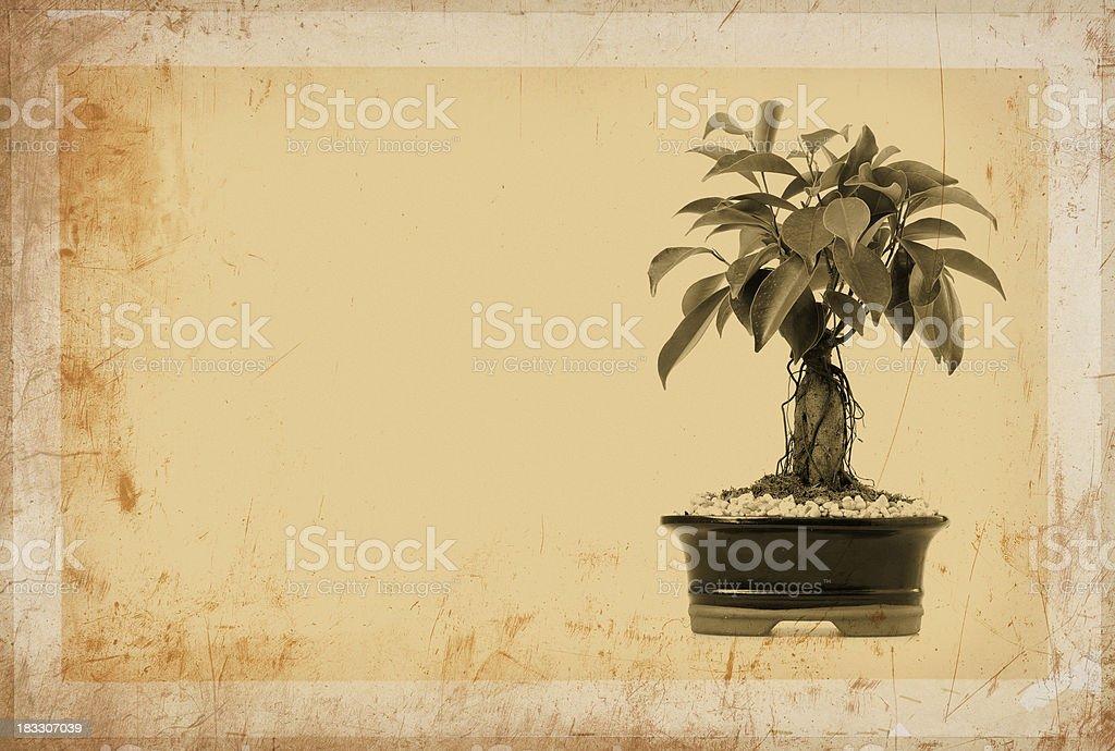sepia bonsai royalty-free stock photo