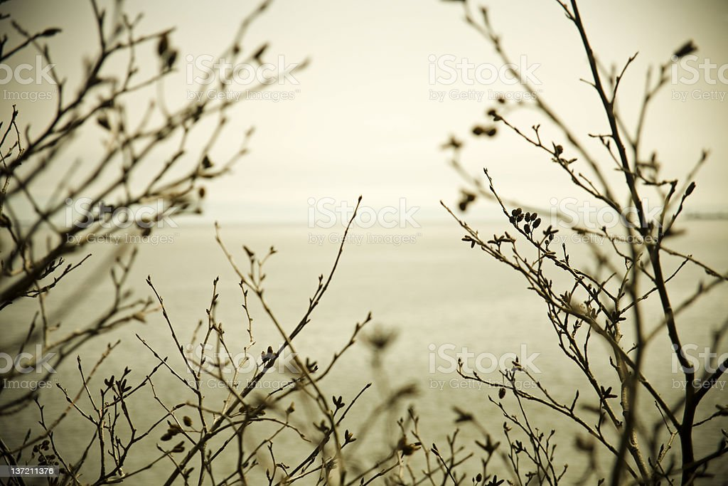 Sepia branches royalty-free stock photo