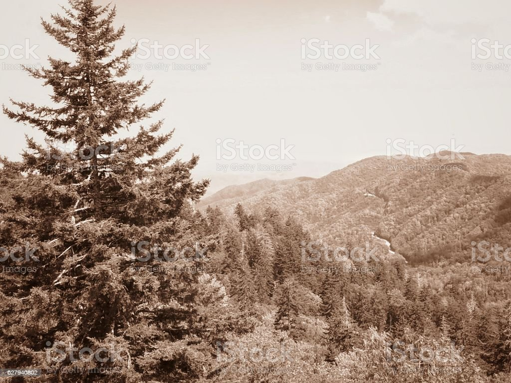 Sepia Newfound Gap Road Great Smoky Mountain National Park, Tennessee stock photo