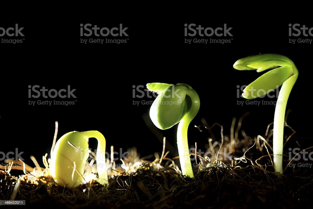 Sequence of Plant stock photo