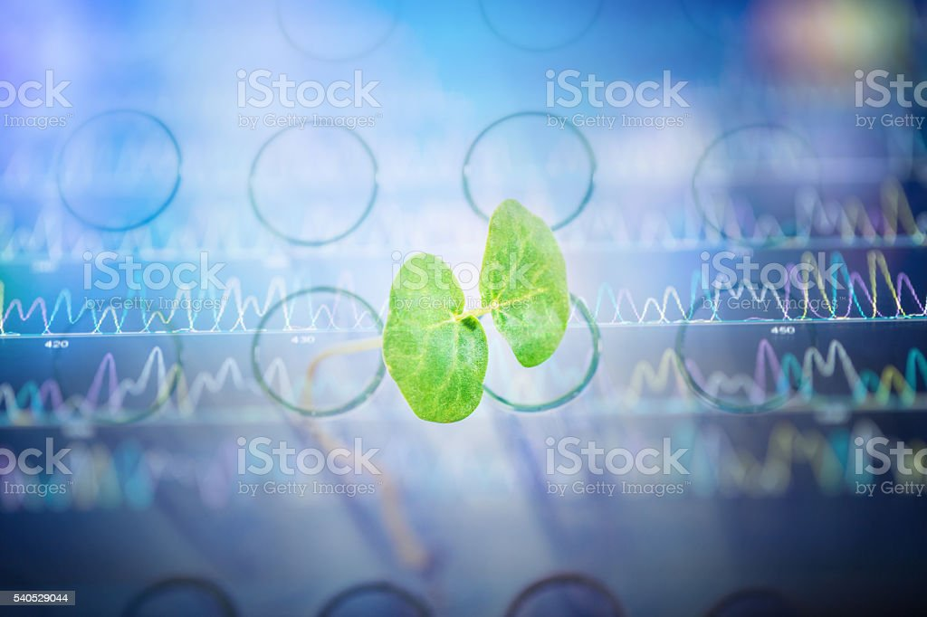 DNA sequencing peaks show with buck wheat sapling stock photo