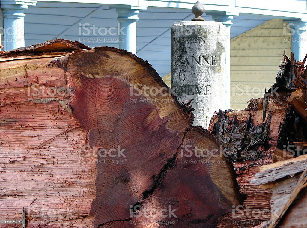 Sequoia down royalty-free stock photo