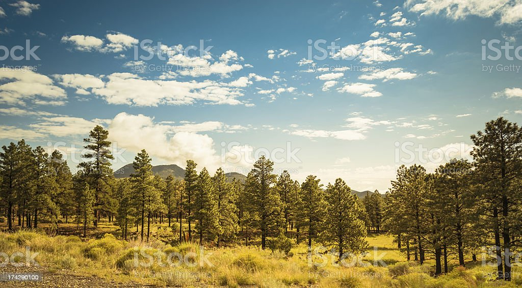 Sequoia National Park with pine tree in spring stock photo