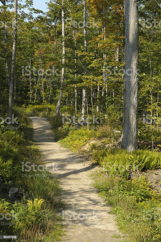 Serene Forest Path stock photo