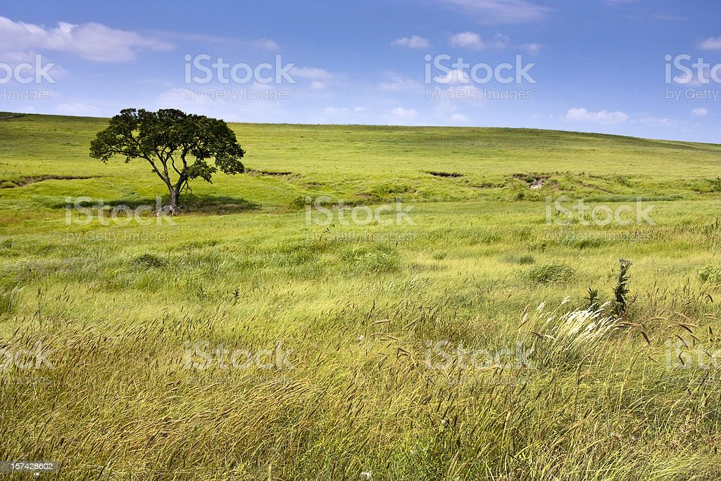 Serene landscape of  Kansas Tallgrass Prairie Preserve rolling hills royalty-free stock photo