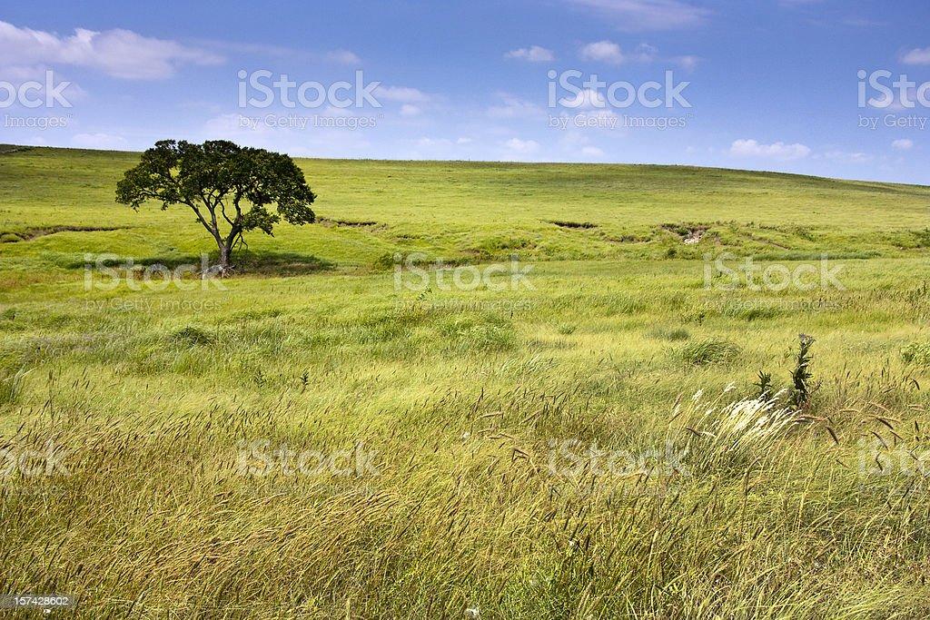 Serene landscape of  Kansas Tallgrass Prairie Preserve rolling hills stock photo