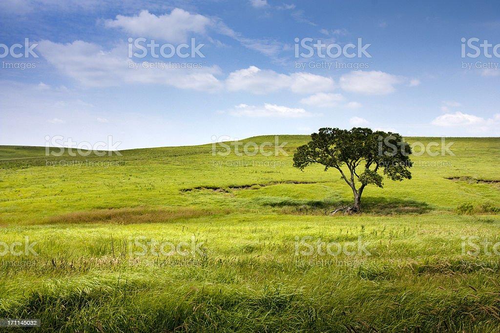 Serene landscape Rolling Hills Single Tree Kansas Tallgrass Prairie Preserve stock photo