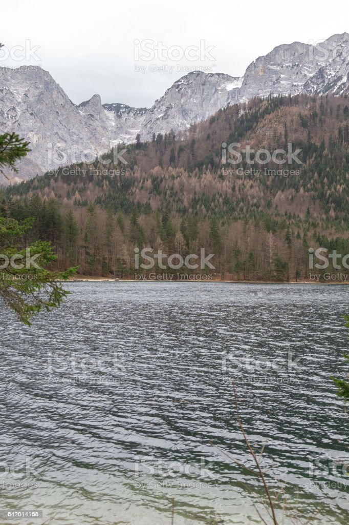 serene scene of forest and a lake stock photo