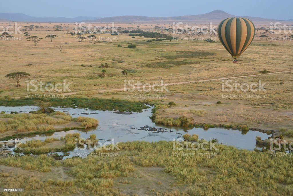 Serengeti hot balloon over hippo royalty-free stock photo